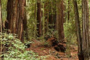 Armstrong-Redwood-State-Res