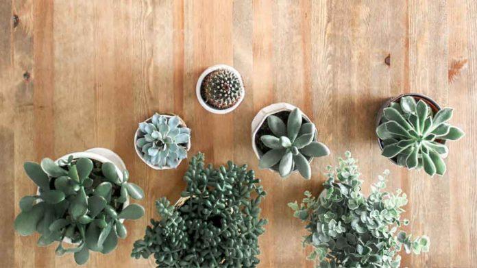Mother's Day Plant Sale_Succulents