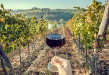 Alexander Valley Winery